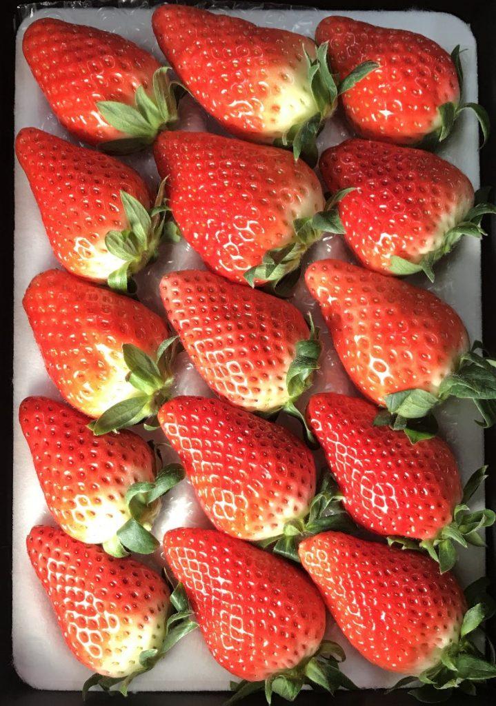 静岡いちご:ジャンボイチゴ15粒