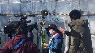 テレビ取材(牧之原市内のいちごハウスにて)001